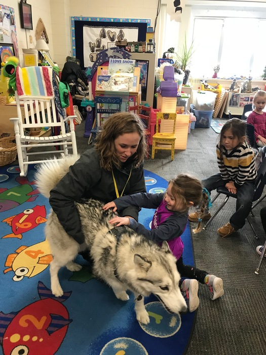 Ivy, the Siberian husky, amazed Ms. Boldger's junior kindergarten class with her strength and playfulness. The chase was on and the giggles were contagious. Thank you Sammy for having your wonderful pet visit us. Thank you for playing with us, Ivy! You could be in the Iditarod! #WalworthJ1
