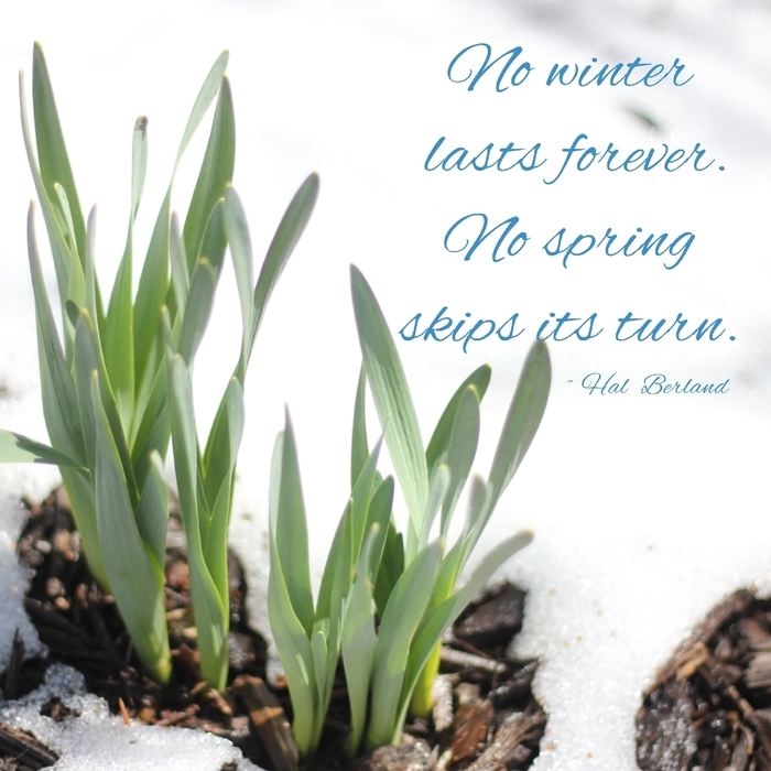 No winter lasts forever. No spring skips its turn.