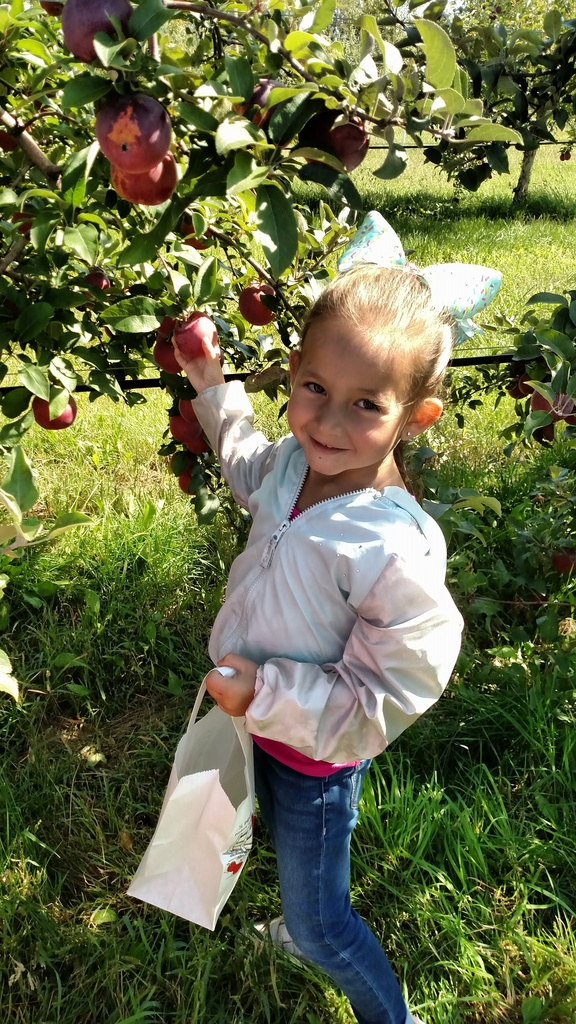 Ms. Koltes' junior kindergarten class enjoyed a beautiful day at Royal Oak Farm Orchard. 🍎🍏 #WeLoveWalworth #WalwothJ1